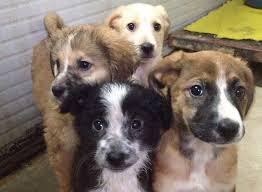 Cuccioli chiedono aiuto