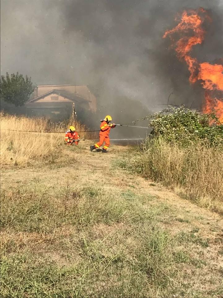 Uliveto devastato da incendio