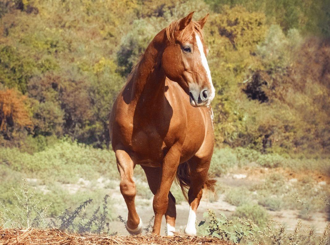 Regalare Cavallo per Una persona speciale