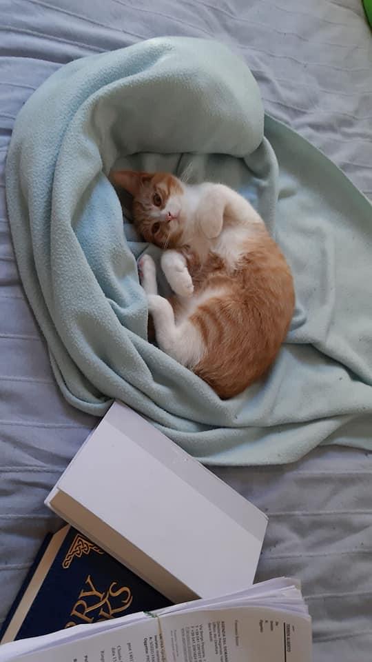 Aiuta Dalek, il gattino malato di FIP
